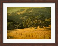 Oak and Fence Fine-Art Print