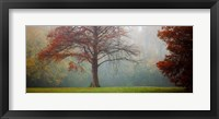 A Late Autumn Morning Fine-Art Print
