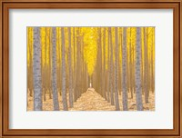 Silence Is Golden Fine-Art Print
