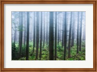 Misty Pines Fine-Art Print