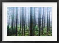 Misty Pines Fine-Art Print