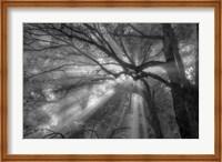 Forest Fog Fine-Art Print