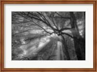 Forest Fog Fine-Art Print