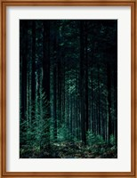 Deep Green Fine-Art Print
