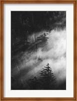 Misty Pine Woods Fine-Art Print