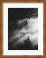 Misty Pine Woods Fine-Art Print