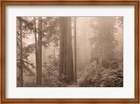 Enchanted Forest II Fine-Art Print