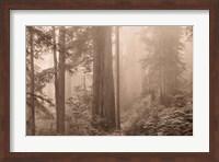 Enchanted Forest II Fine-Art Print