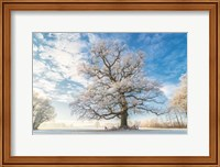 Cold Oak Fine-Art Print