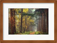 Colors of the Forest Fine-Art Print