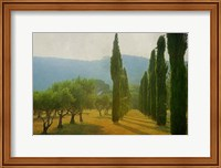 Cypress Shadows Fine-Art Print