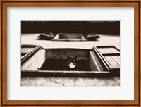 Dali the Cat Fine-Art Print