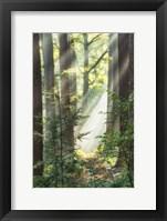 Sunbeam and Spiderweb Fine-Art Print
