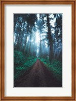 Forest Pathways Fine-Art Print