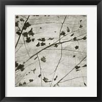 Laced Sky III Fine-Art Print
