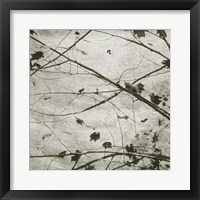 Laced Sky IV Fine-Art Print