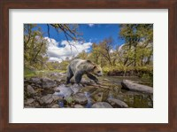Grizzly Bear Creek Fine-Art Print
