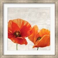 Bright Poppies I Fine-Art Print