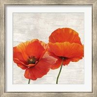 Bright Poppies II Fine-Art Print