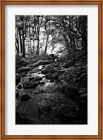 Lush Creek in Forest BW Fine-Art Print