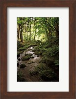 Lush Creek in Forest Fine-Art Print