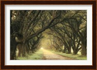 Evergreen Alley Fine-Art Print