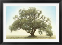 Oak & Blue Sky Fine-Art Print