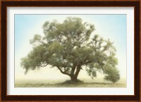 Oak & Blue Sky Fine-Art Print