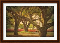 Three Oaks and Azaleas Fine-Art Print