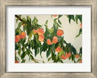 Peach Tree Fine-Art Print