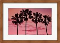 Pink Palms Fine-Art Print