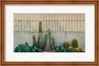 Cactus Garden Fine-Art Print