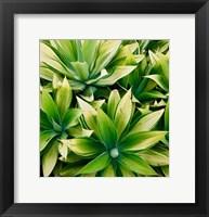 Succulent V Fine-Art Print