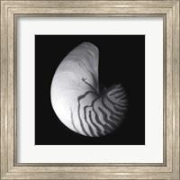 Shell Collection III Fine-Art Print