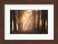 Look for the Light in All Things Fine-Art Print