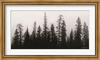 Rocky's Trees Fine-Art Print