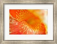 Orange Canna Flower Detail Fine-Art Print
