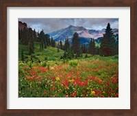 Colorado, Laplata Mountains, Wildflowers In Mountain Meadow Fine-Art Print