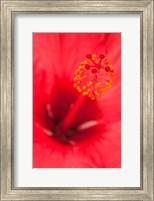 Hawaii, Kauai, Detail Of Hibiscus Flower Fine-Art Print