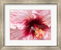 Close-Up Of A Hibiscus Flower Fine-Art Print