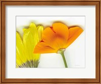 Flower Friends Fine-Art Print