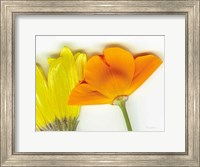 Flower Friends Fine-Art Print