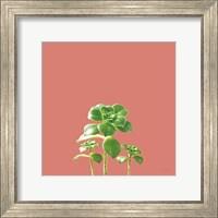 Succulent Simplicity IX Coral Fine-Art Print