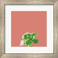 Succulent Simplicity VII Coral Fine-Art Print
