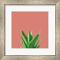 Succulent Simplicity V Coral Fine-Art Print
