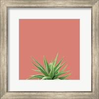 Succulent Simplicity I Coral Fine-Art Print