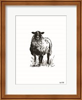 Farmhouse Sheep Fine-Art Print