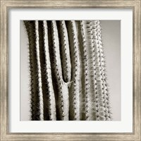 Cactus Star Fine-Art Print