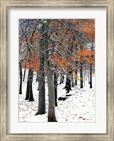 SnowFall II Fine-Art Print