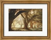 Oak Alley Morning Light Fine-Art Print